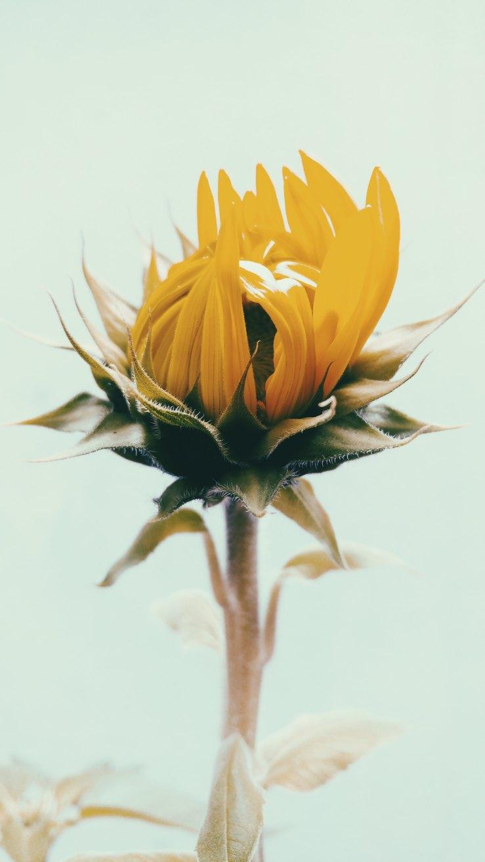 lucas-silva-pinheiro-santos-323448.jpg